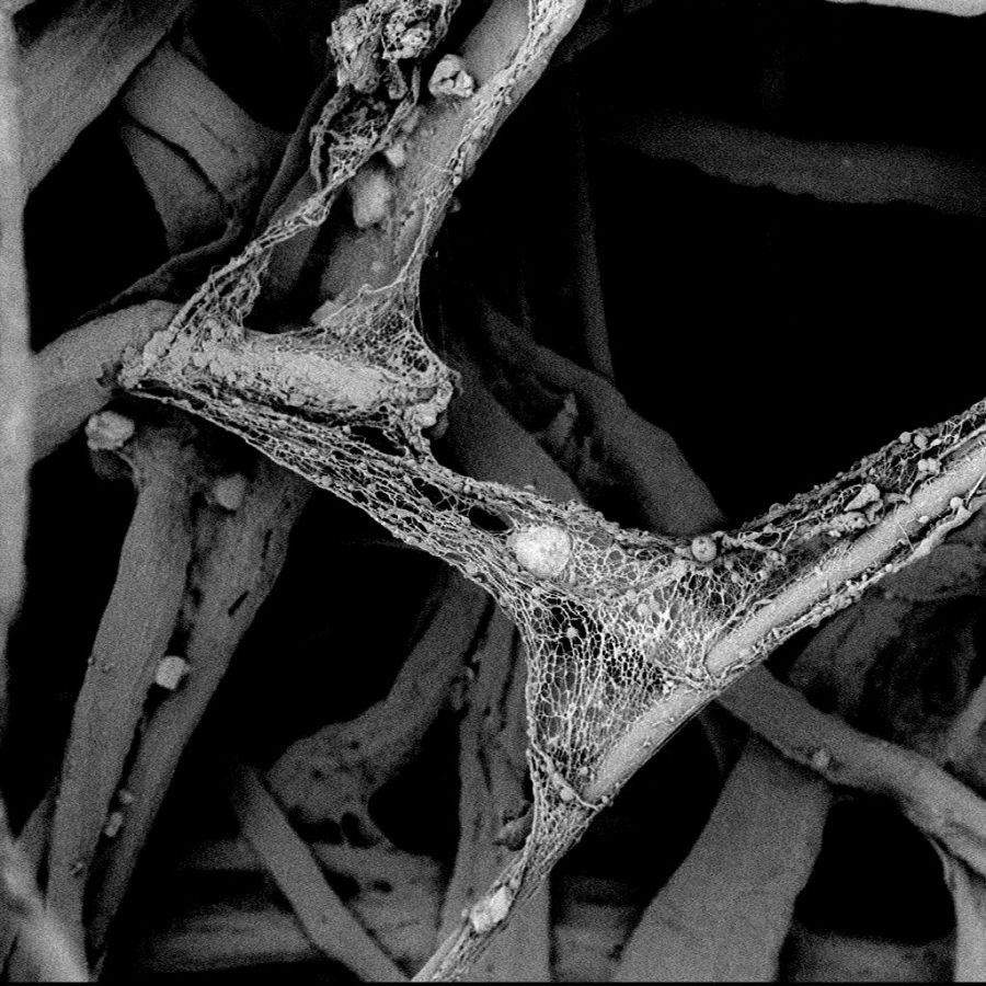 Another SEM image of a Defective pulse cleaned air filter
