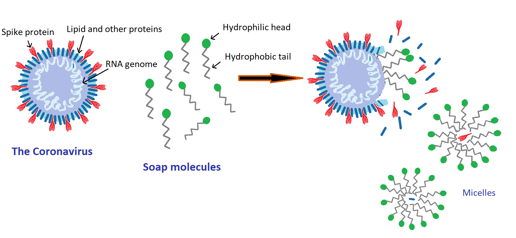 Micelle deativication of virus