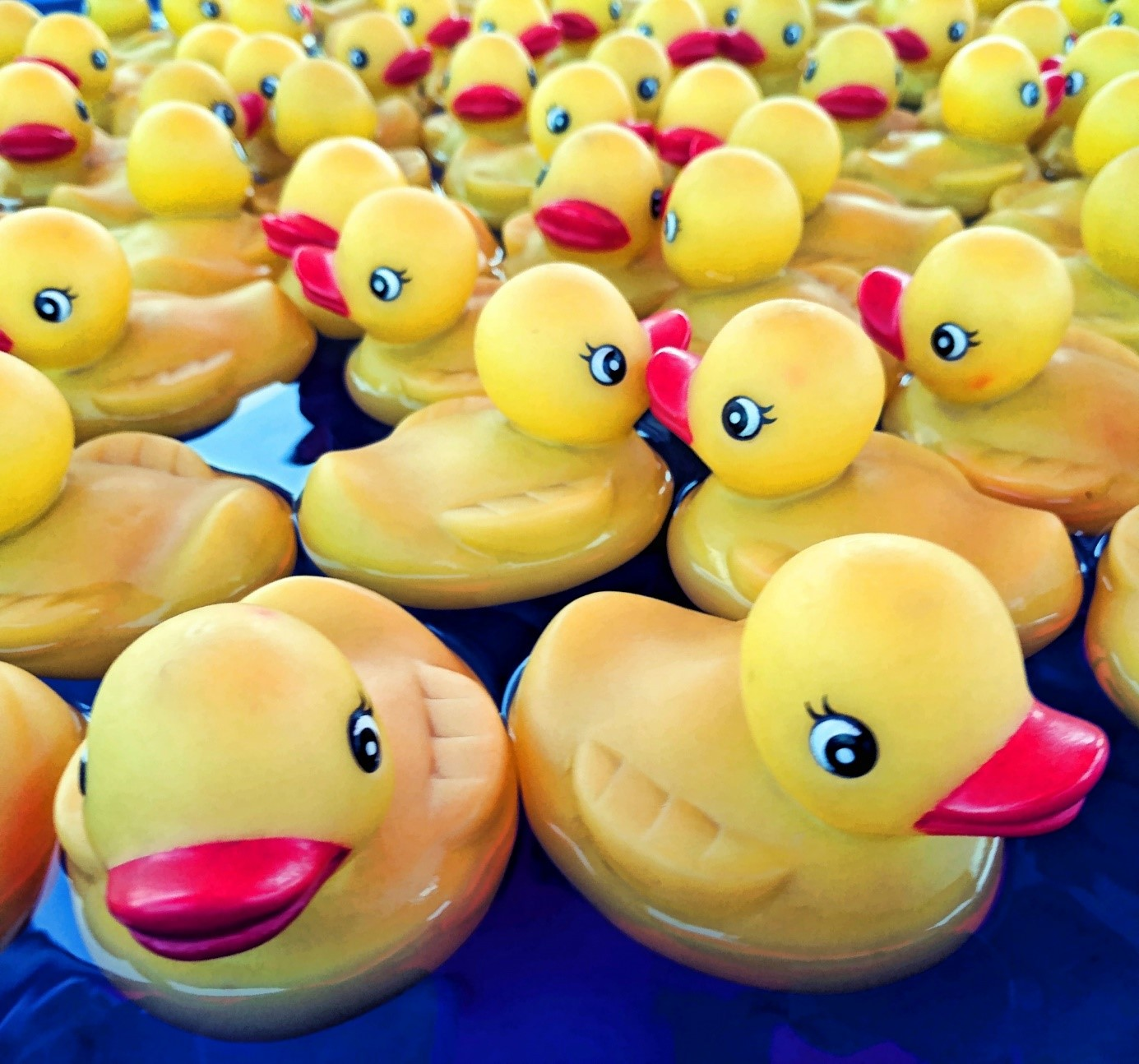 Rubber ducks floating on water