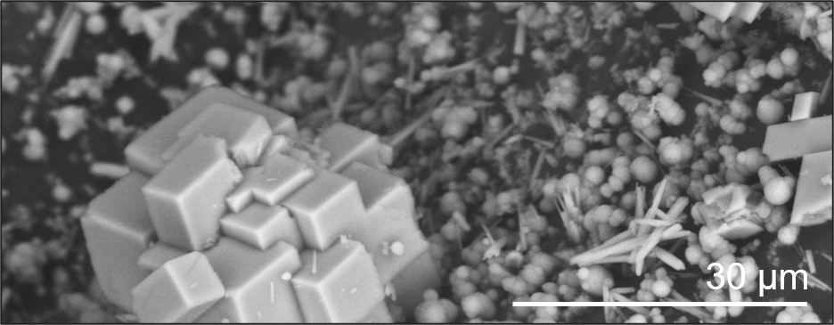 BSE image from Axia ChemiSEM